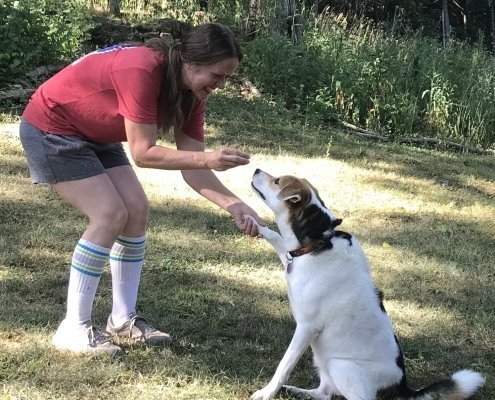 dog training manners