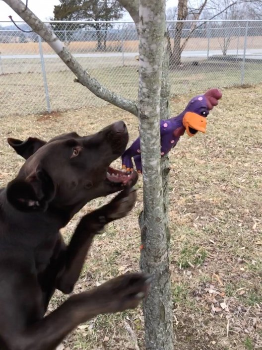 dog catching toy