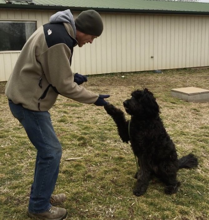 fluffy dog shaking hands