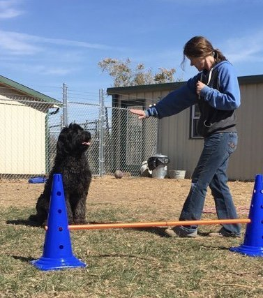 training black dog to sit and jump